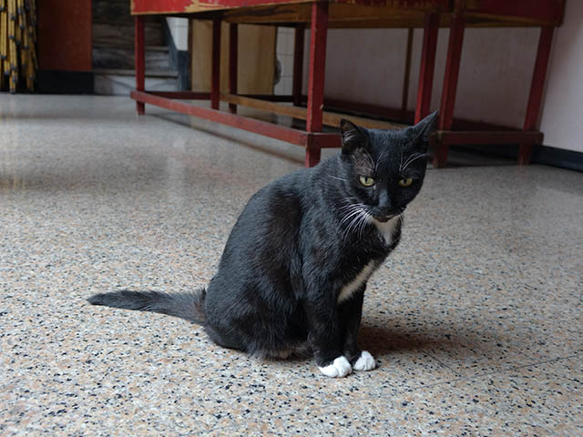 Cats of Yi Tien Palace, #0646