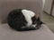 Cat @ Minimal Cafe, #0196