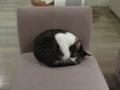 Cat @ Minimal Cafe, #0198