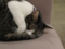 Cat @ Minimal Cafe, #0200