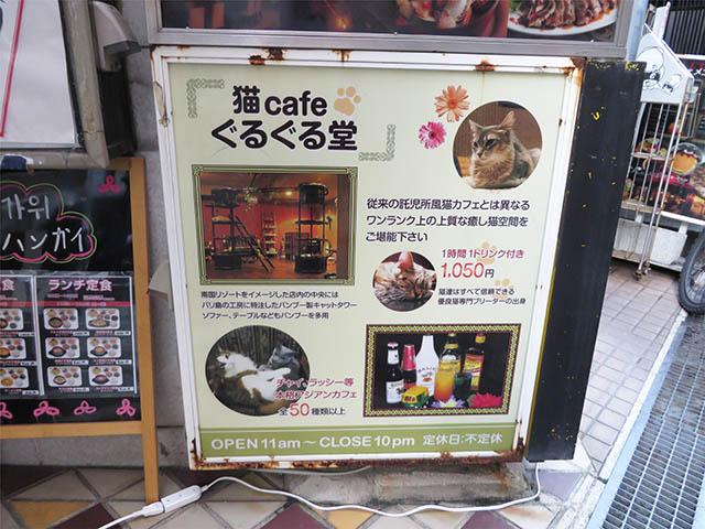 猫cafe ぐるぐる堂, #1