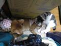 Beatrice, Elisabetta & Umi, #0336