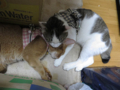 Beatrice & Umi, #0341