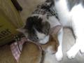 Beatrice & Umi, #0342