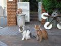 Beatrice, Caterina & Umi, #0957