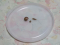 Snail, #7105