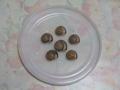 Snail, #7111