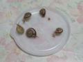 Snail, #8172