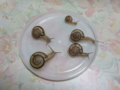 Snail, #8577