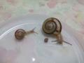 Snail, #8581