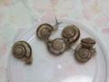 Snail, #9570
