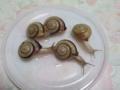 Snail, #9578