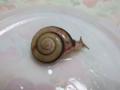 Snail, #9582