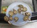 Snail, #A605