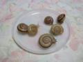 Snail, #A867