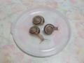 Snail, #A879