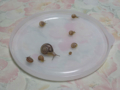 Snail, #0530
