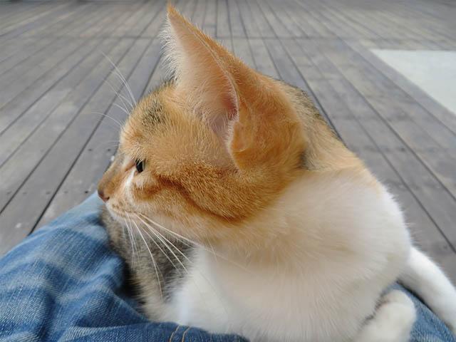 Houtong Friendly Cat, #0108