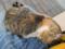 Houtong Friendly Cat, #0110