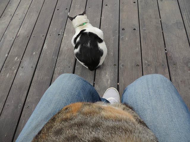 Houtong Friendly Cat, #0114