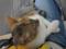 Houtong Friendly Cat, #0116