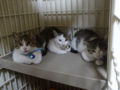 Rescued Cats, #4724