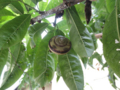 Snail, #7996