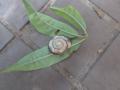 Snail, #7999