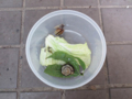 Snail, #8001