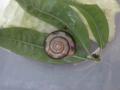 Snail, #8005