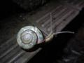 Snail, #8019