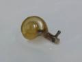 Snail, #6419 (Closeup)