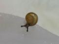 Snail, #6524 (Closeup)