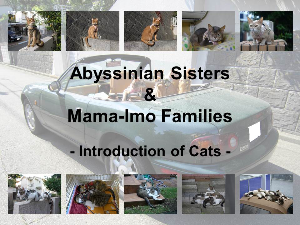 Introduction of Cats #01 - Title