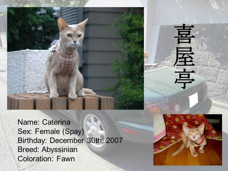 Introduction of Cats #06 - Caterina