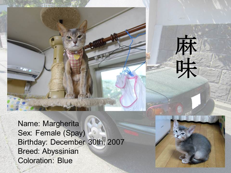 Introduction of Cats #05 - Margherita