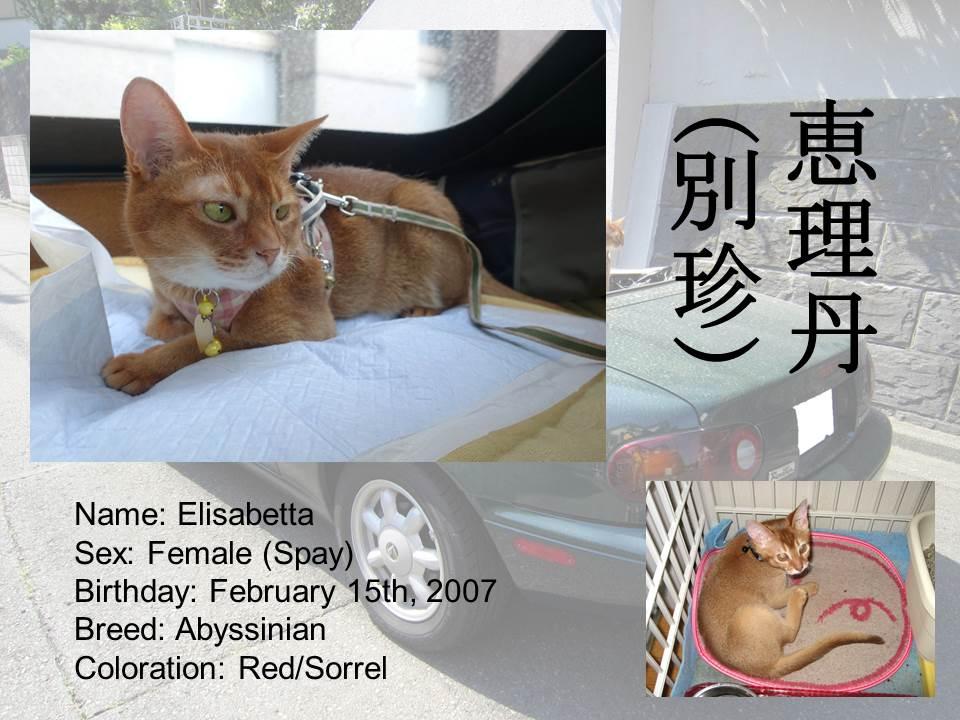 Introduction of Cats #04 - Elisabetta