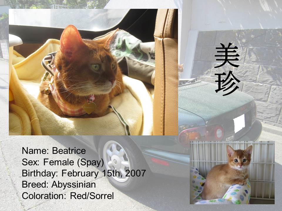 Introduction of Cats #03 - Beatrice