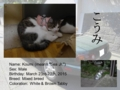 Introduction of Cats #09 - Koumi