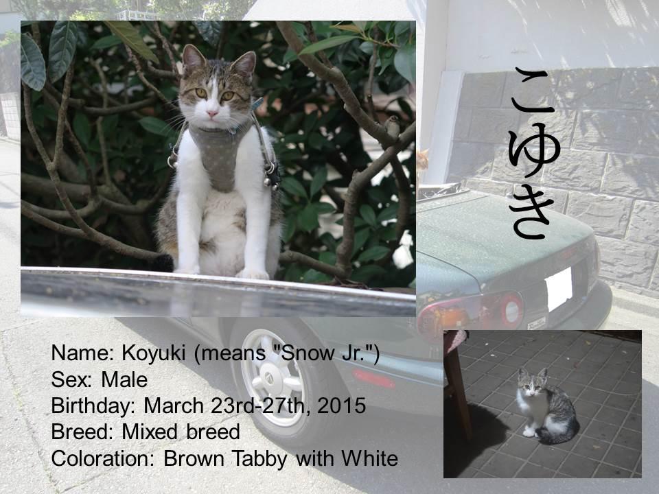 Introduction of Cats #12 - Koyuki