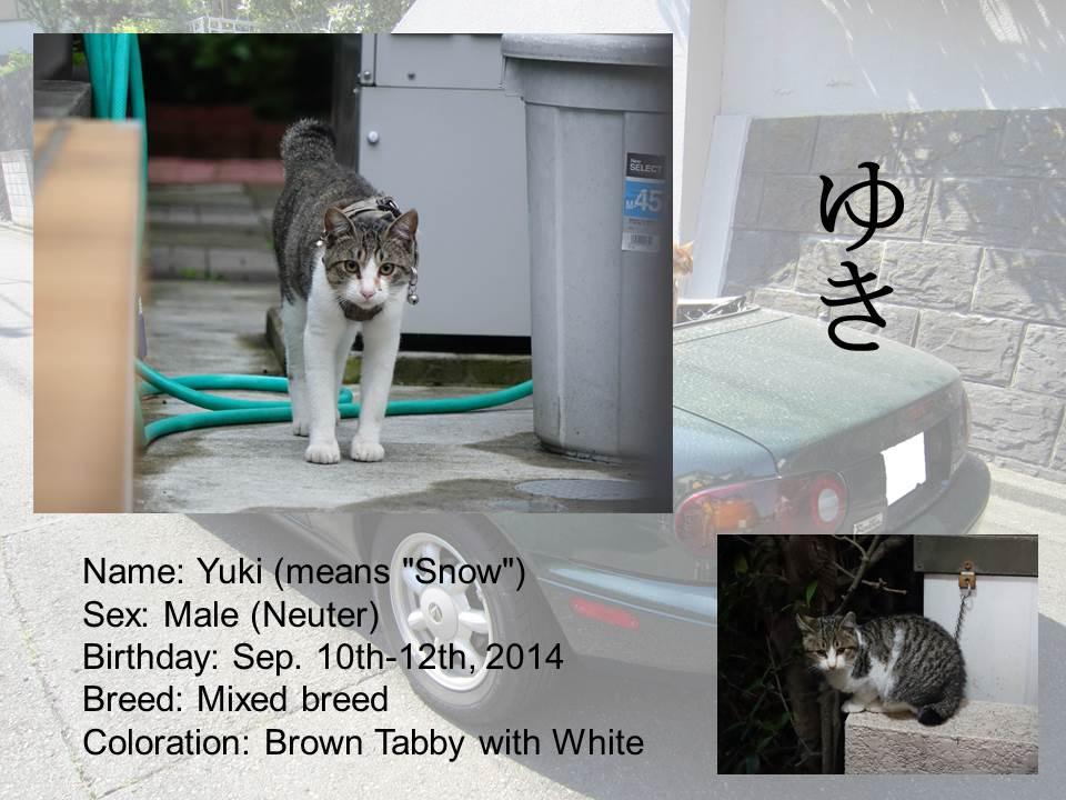 Introduction of Cats #11 - Yuki