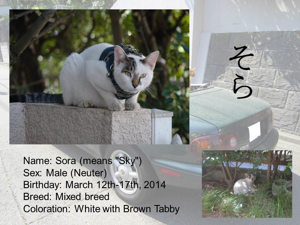 Introduction of Cats #10 - Sora