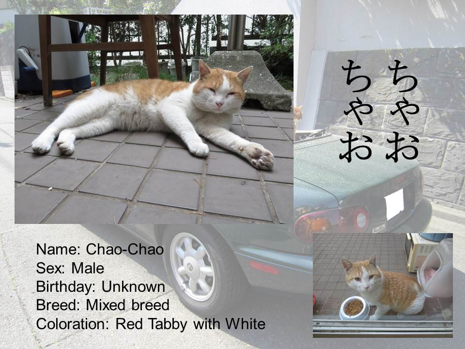 Introduction of Cats #15 - Chao-Chao