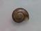 Snail, #9867 (9cm) (Closeup)