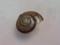 Snail, #9885 (10cm) (Closeup)