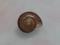 Snail, #9888 (9cm) (Closeup)