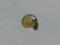Snail, #A161 (Closeup)