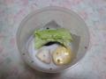 Snail, #A176