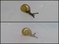 Snail, #A321 (Compare)