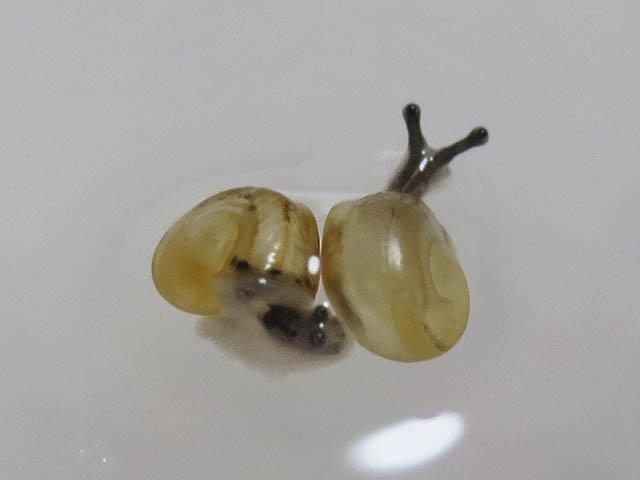 Snail, #9995 (Closeup)